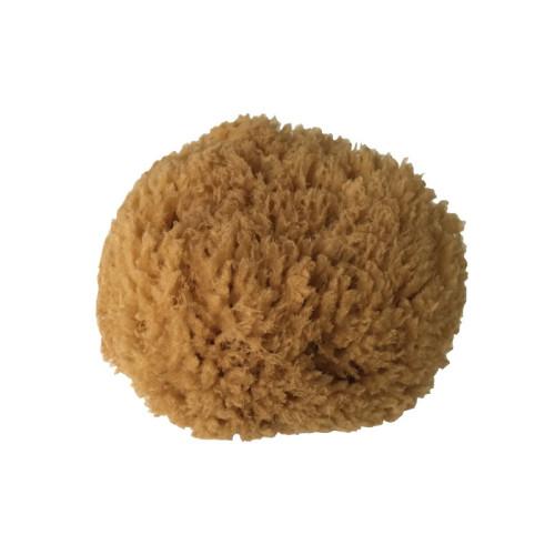 Mořská houba 11-12 cm (Kalymnos, Řecko)